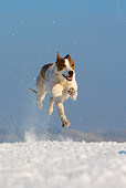 DOG 14 KH0017 01