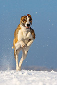 DOG 14 KH0018 01