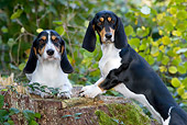 DOG 14 KH0019 01