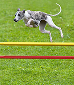 DOG 14 KH0023 01