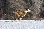 DOG 14 KH0032 01