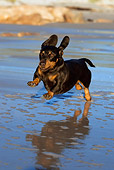 DOG 14 KH0033 01