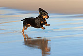 DOG 14 KH0034 01