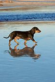 DOG 14 KH0036 01