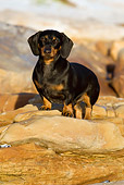 DOG 14 KH0040 01