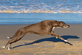 DOG 14 KH0042 01