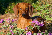 DOG 14 LS0001 01