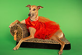 DOG 14 MQ0001 01