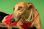 DOG 14 MQ0003 01