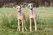 DOG 14 NR0006 01