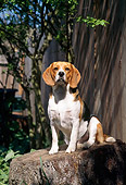 DOG 14 RC0002 01