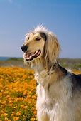 DOG 14 RC0003 01