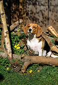 DOG 14 RC0004 01