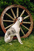 DOG 14 RC0005 01