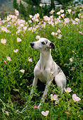 DOG 14 RC0006 01