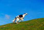 DOG 14 RK0019 04