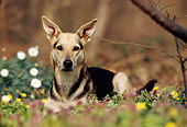 DOG 14 SS0010 01