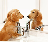 DOG 14 YT0002 01