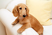 DOG 14 YT0004 01