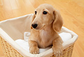 DOG 14 YT0006 01
