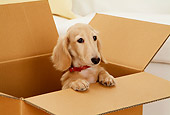 DOG 14 YT0007 01