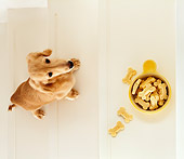 DOG 14 YT0008 01