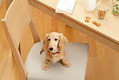 DOG 14 YT0009 01