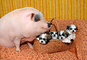 DOG 15 RC0001 01
