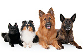 DOG 17 AC0001 01