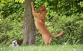 DOG 17 JE0011 01