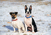 DOG 17 JN0001 01