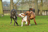 DOG 17 NR0001 01