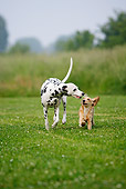 DOG 17 PE0001 01