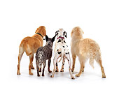 DOG 17 RK0105 12