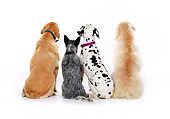 DOG 17 RK0105 13