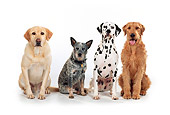 DOG 17 RK0107 06