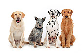 DOG 17 RK0107 09