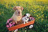 DOG 17 RK0111 04