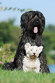 DOG 17 SS0001 01