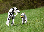 DOG 17 KH0001 01