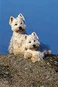 DOG 17 KH0007 01