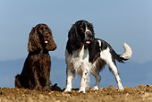DOG 17 KH0009 01
