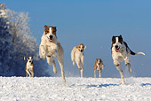 DOG 17 KH0014 01