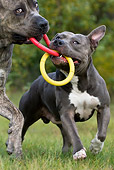 DOG 17 KH0017 01