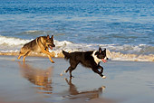 DOG 17 KH0021 01