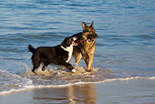 DOG 17 KH0022 01