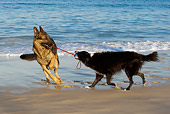 DOG 17 KH0023 01