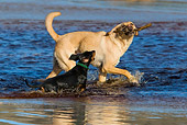 DOG 17 KH0027 01