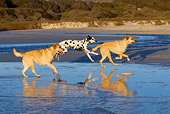 DOG 17 KH0028 01