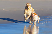 DOG 17 KH0029 01